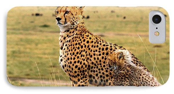 Cheetahs IPhone Case by Babak Tafreshi