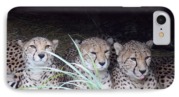 IPhone Case featuring the photograph Cheetahs by Martin Blakeley