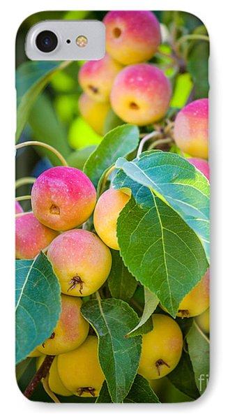 Chelan Apples IPhone Case