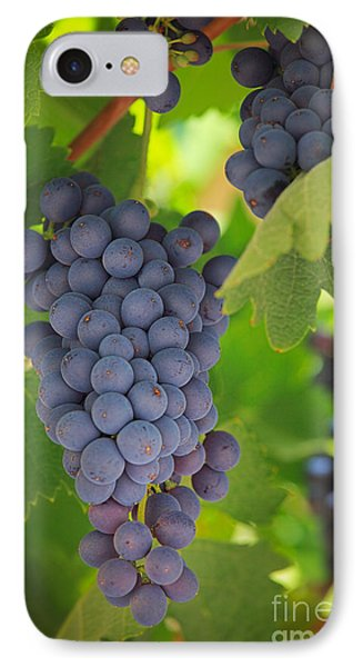 Chelan Blue Grapes IPhone Case by Inge Johnsson