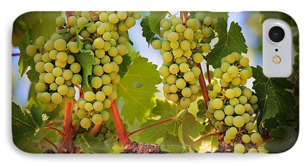 Chelan Grapevines IPhone Case by Inge Johnsson