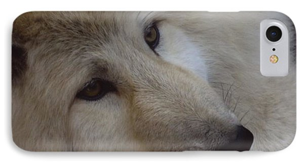 Montana Wolf  IPhone Case