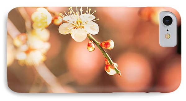Cherry Blossom In Selective Focus IPhone Case by Panoramic Images