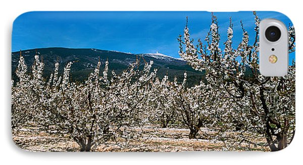 Cherry Blossom, Mont Ventoux IPhone Case by Panoramic Images