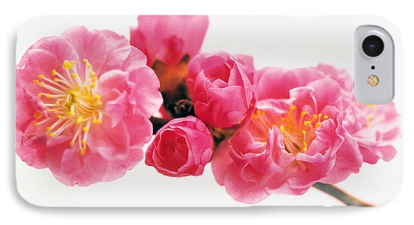 Cherry Blossom IPhone Case by Panoramic Images