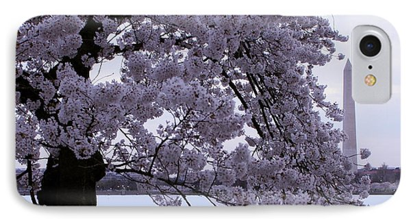 Cherry Blossom Special IPhone Case by Myrna Bradshaw