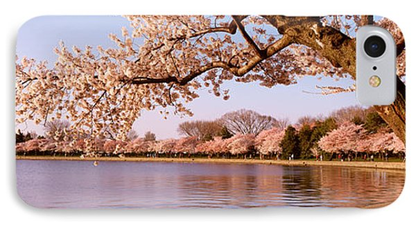 Cherry Blossom Tree Along A Lake IPhone Case by Panoramic Images