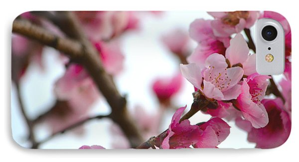 Cherry Blossoms 1 IPhone Case by Deprise Brescia