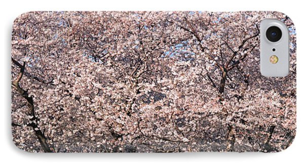 Cherry Blossoms Blooming In Springtime IPhone Case by Panoramic Images