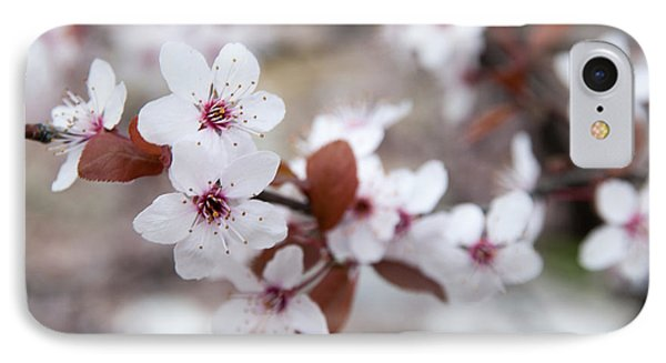 Cherry Blossoms Phone Case by Hannes Cmarits
