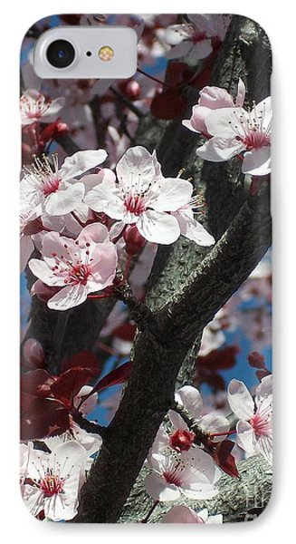 Cherry Blossoms Phone Case by Janet Berch
