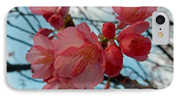 Cherry Blossoms IPhone Case by Pamela Walton