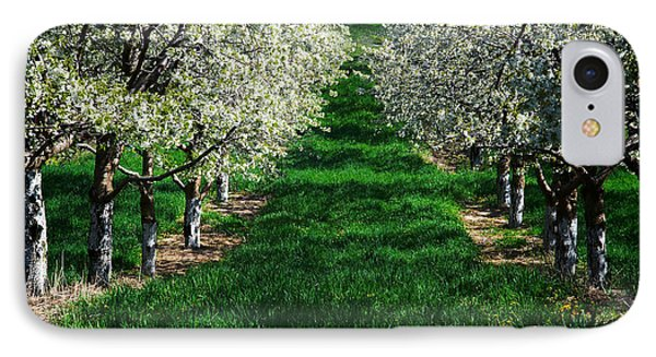 Cherry Orchard Morning IPhone Case by Mary Lee Dereske