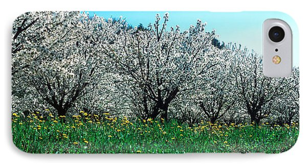 Cherry Trees In A Field IPhone Case by Panoramic Images