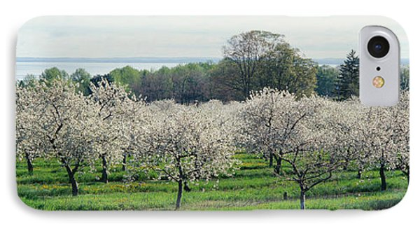 Cherry Trees In An Orchard, Mission IPhone Case