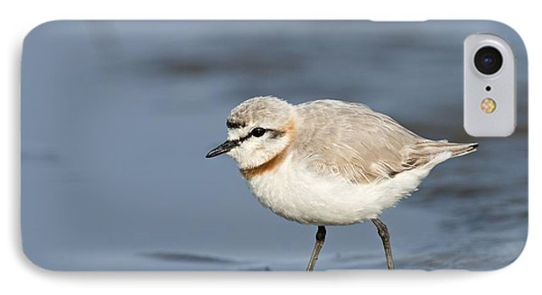 Chestnut-banded Plover On Mud Flats IPhone Case by Tony Camacho