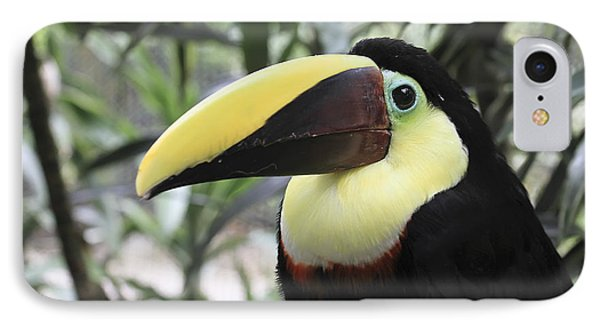 IPhone Case featuring the photograph Chestnut-mandibled Toucan by Teresa Zieba