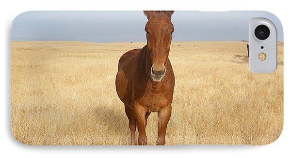 Chestnut Mule In Gold IPhone Case