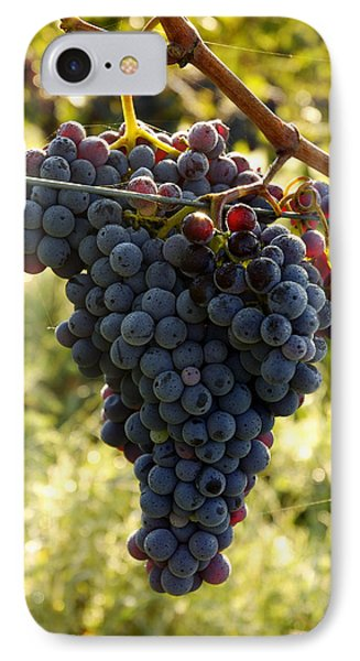 Chianti Grapes IPhone Case by Norman Pogson