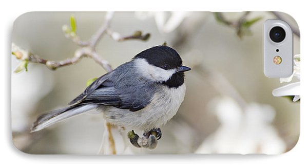 Chickadee And Magnolia - D008970 IPhone Case by Daniel Dempster