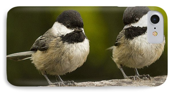 Chickadee Dee Dee Phone Case by Jean Noren
