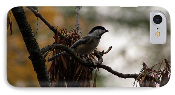 Chickadee In A Tree IPhone Case