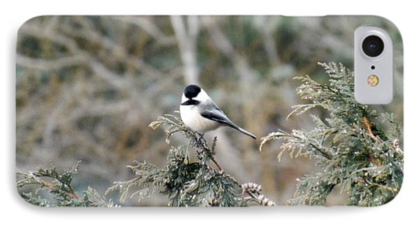 IPhone Case featuring the photograph Chickadee In Cedar by Brenda Brown