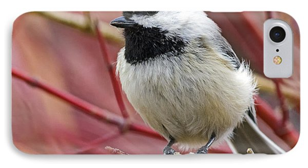 Chickadee In Red Twig Dogwood IPhone Case by Stephen  Johnson