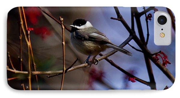 IPhone Case featuring the photograph Chickadee by Robert L Jackson