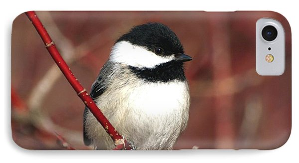 Chickadee IPhone Case by Susan  Dimitrakopoulos