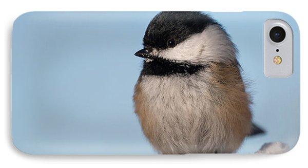 Chickadee Up Close IPhone Case