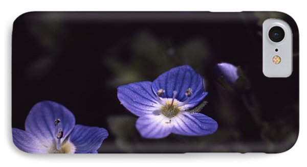 Chickweed IPhone Case by Retro Images Archive