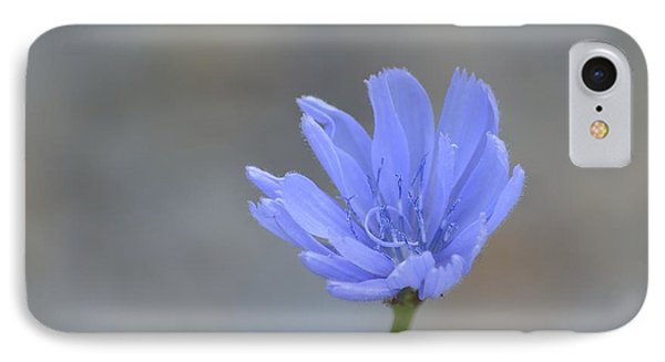 Chicory Phone Case by Randy Bodkins