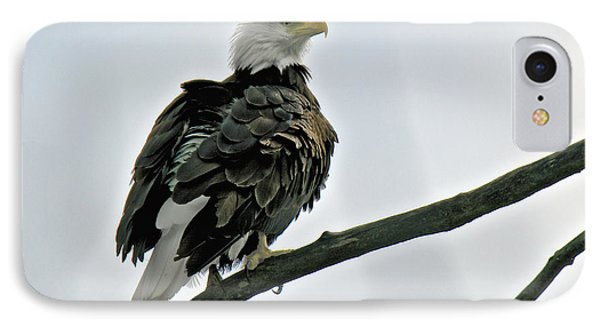 Chilkat River Bald Eagle IPhone Case by Stephen  Johnson