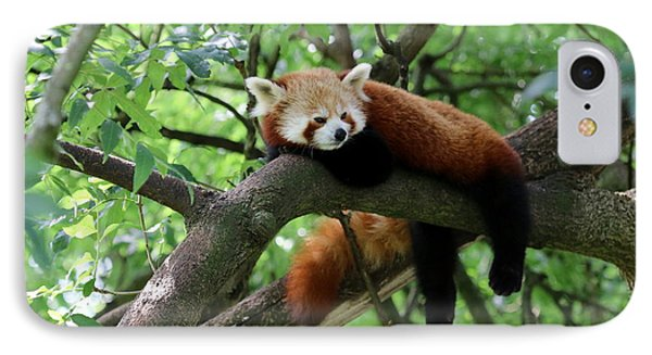 Chilling Red Panda IPhone Case by Christiane Schulze Art And Photography