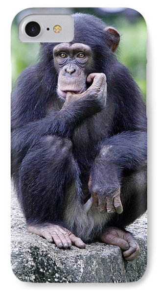 Chimp Sucking His Thumb Phone Case by Shoal Hollingsworth