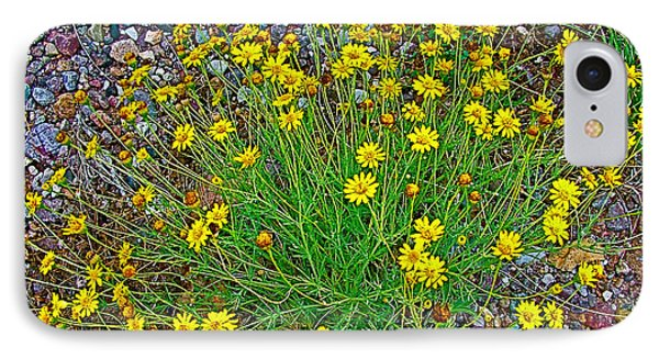 Chinchweed In Big Bend National Park-texas IPhone Case