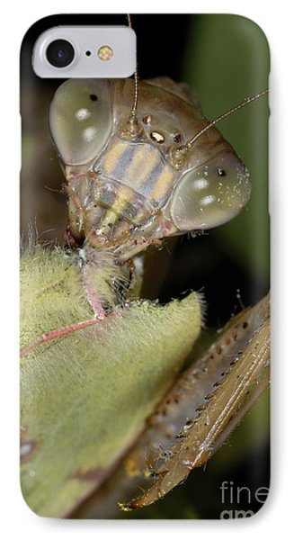 Chinese Mantid Eating A Sulfur Butterfly IPhone Case by Scott Camazine