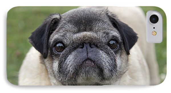 Chinese Pug Dog IPhone Case by Mark Boulton