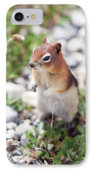 Chipmunk In The Canadian Rockies IPhone Case by Ashley Cooper