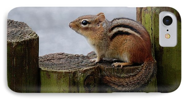 Chipmunk IPhone Case by Kathy Gibbons