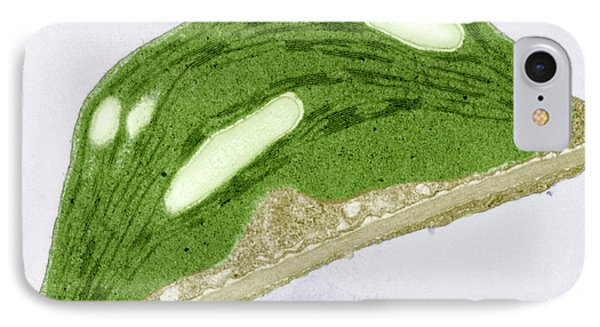 Chloroplast Of Arabidopsis Thaliana. Tem IPhone Case by Science Stock Photography