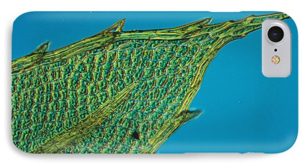 Chloroplasts On Moss Phone Case by Nuridsany et Perennou