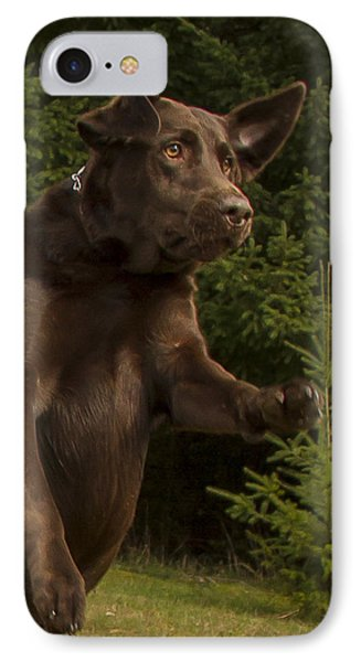 Chocolate Lab Drama IPhone Case by Jean Noren