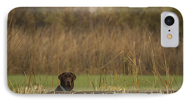 Chocolate Lab In The Field IPhone Case by Jean Noren