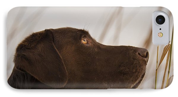 Chocolate Lab Watching The Sky IPhone Case by Jean Noren