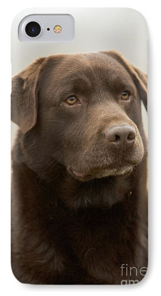 Chocolate Labrador IPhone Case by Jean-Michel Labat