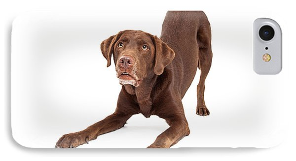 Chocolate Labrador Retriever Dog In Downdog Postion IPhone Case