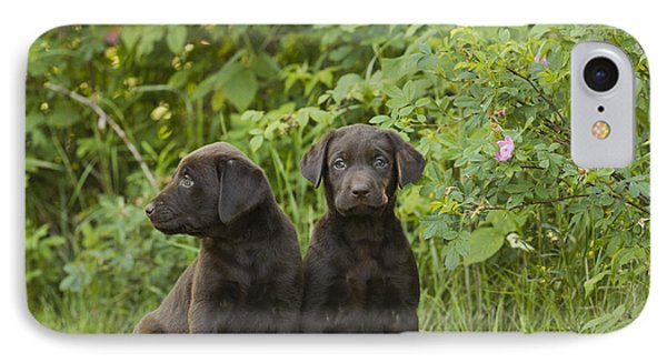 Chocolate Labrador Retriever Puppies Phone Case by Linda Freshwaters Arndt