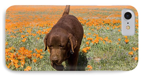 Chocolate Labrador Retriever Walking IPhone Case